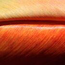 hot meaty velvet by yvesrossetti