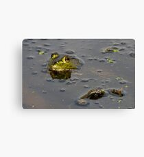 American Bullfrog at Brazos Bend Canvas Print