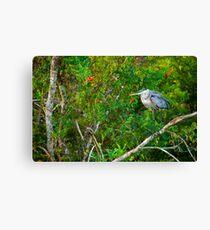Great Blue Heron Environment Canvas Print