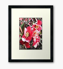 The Bright Pink Flower's Burst Framed Print