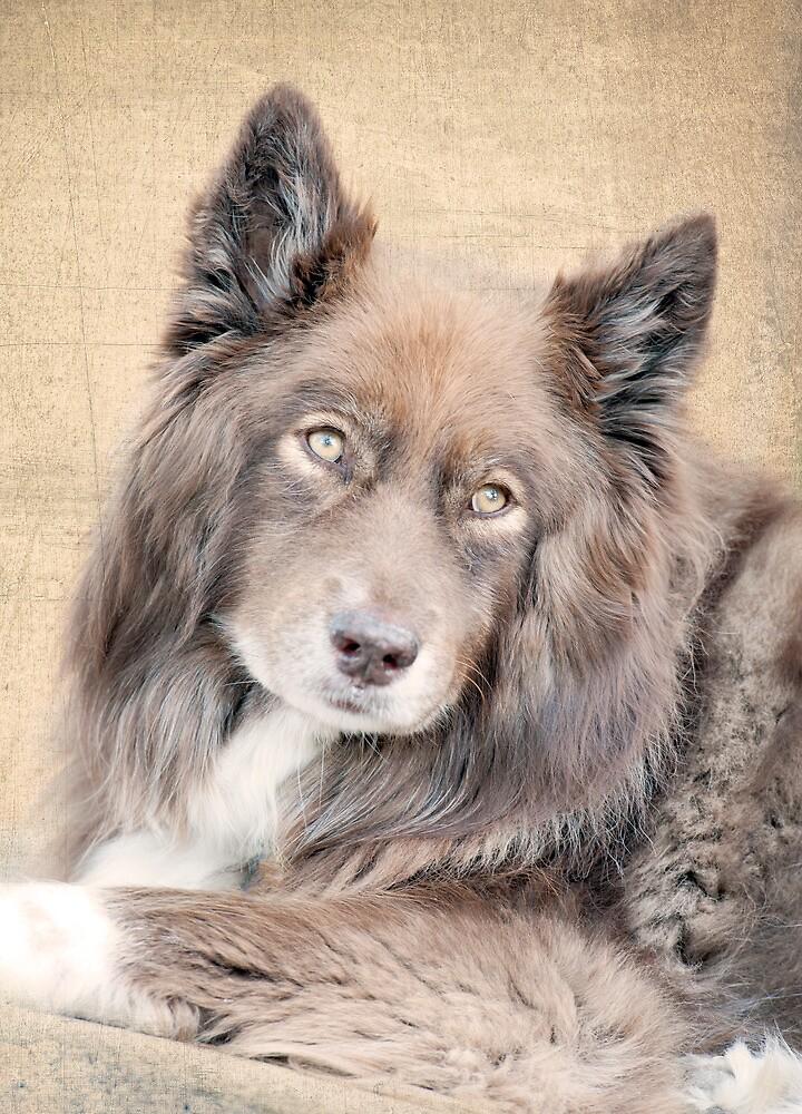 Wolf Eyes by Jenny Dean