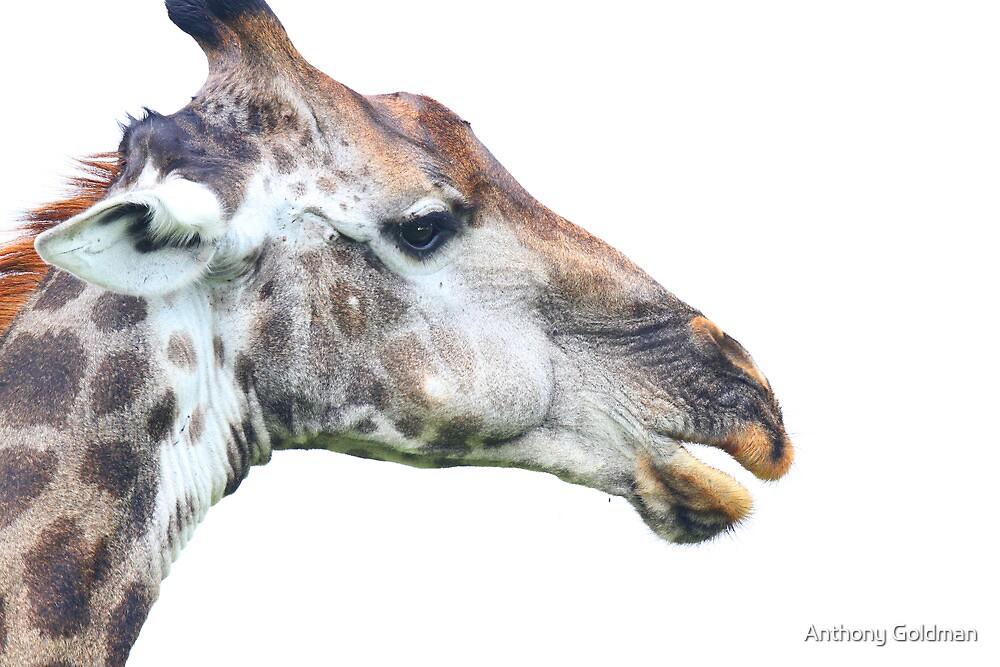 Giraffe profile up close ! by Anthony Goldman