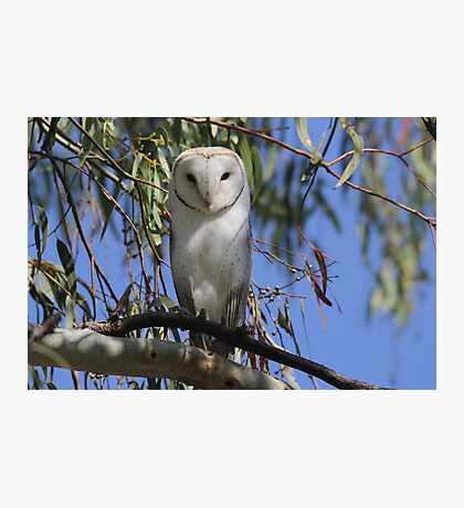 Where is my Barn Owl,  Canberra Australia  Photographic Print