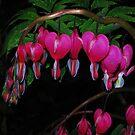 Bleeding Hearts in Spring by Tori Snow