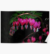 Bleeding Hearts in Spring Poster