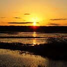 A Golden Evening at the Marsh by lorilee