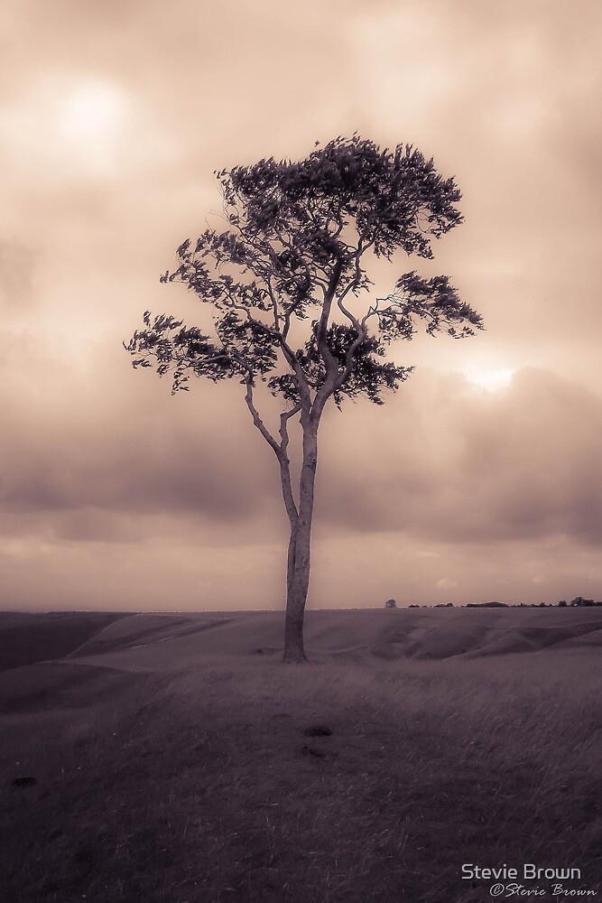 Tree (reworked) by Stevie B