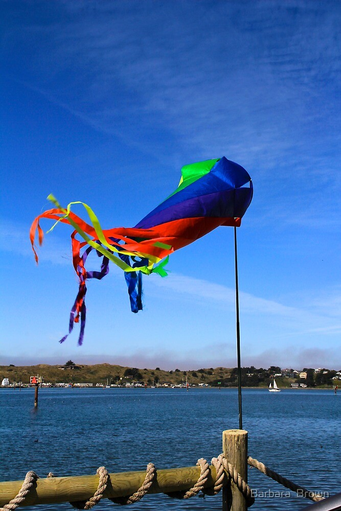 Flying Over the Bay by Barbara  Brown