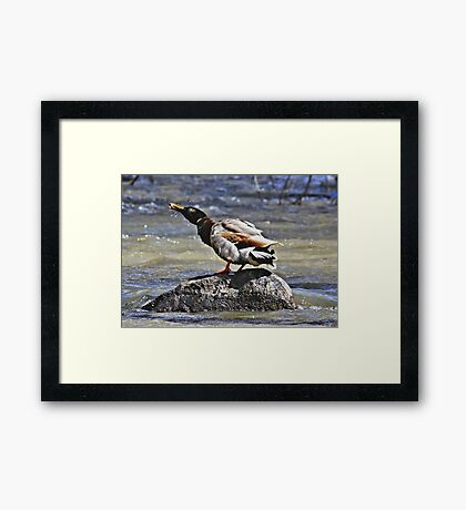 Shake Your feathers Framed Print