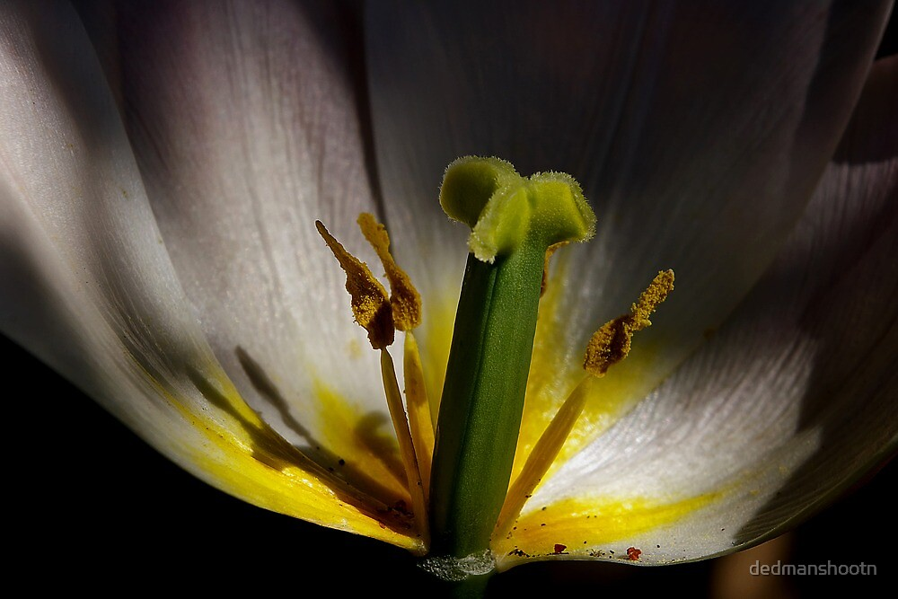 sunspotlight tulip tower by dedmanshootn