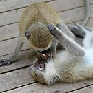 The kiss of a monkey by Anthony Goldman