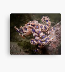 Blue Ringed Octopus Metal Print