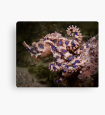 Blue Ringed Octopus Canvas Print