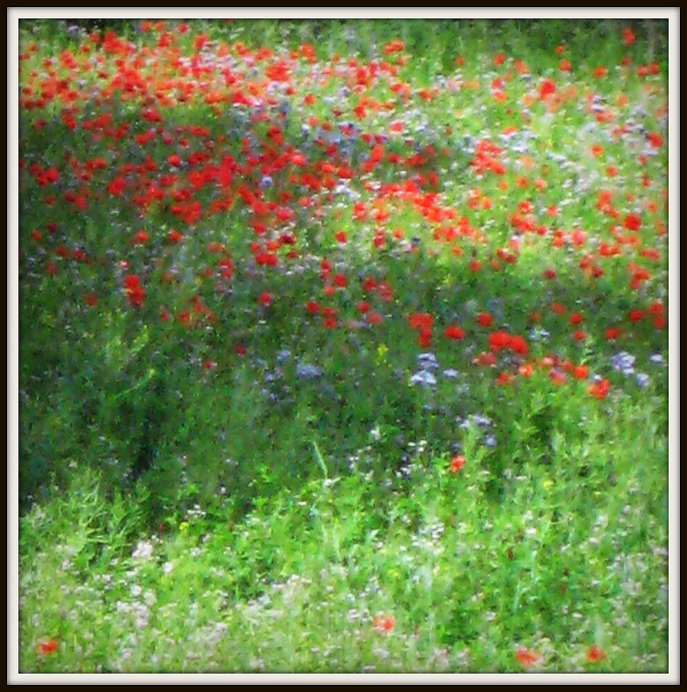 Poppies by Sandra Pearson