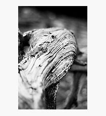 Weathered  Photographic Print