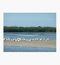 Long Bird Row Photographic Print