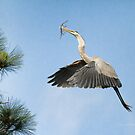 Up To The Nest by Deborah  Benoit