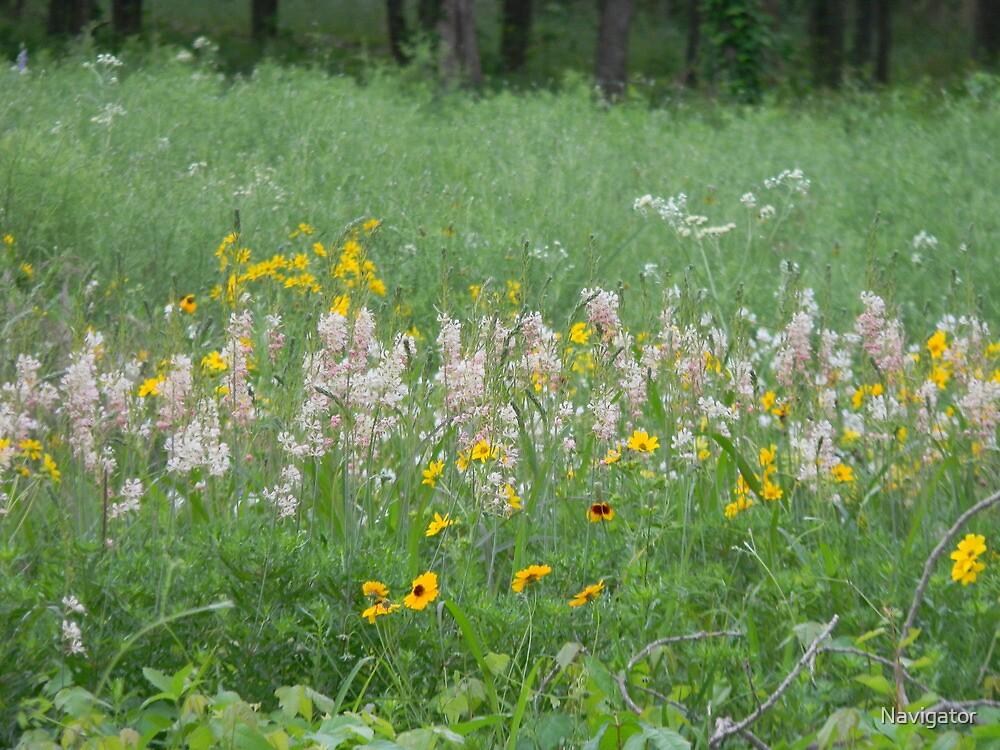 Scarlet Guara in the Meadow by Navigator