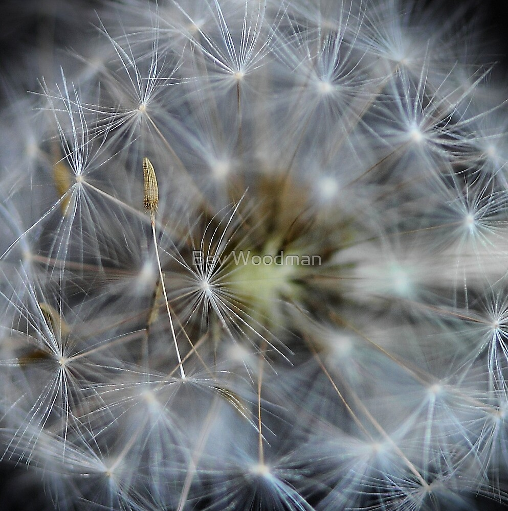 Just Dandy♥ by Bev Woodman