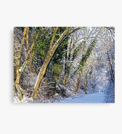 Winters Track Canvas Print
