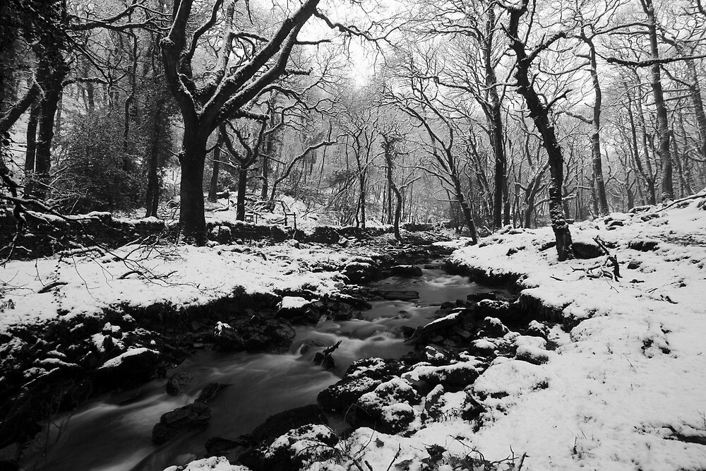 Frozen. by asc-photography