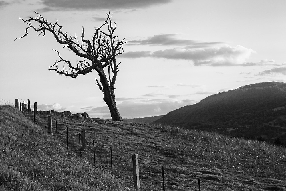 Megalong One Tree by Geoff Smith