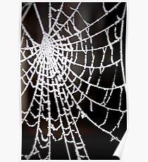 Webs Poster