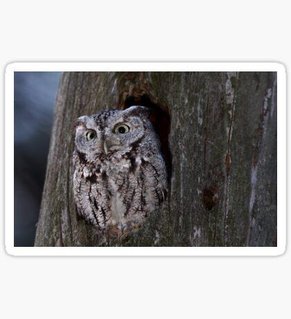 Eastern Screech-Owl Sticker