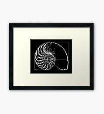 Fibonacci on a nautilus shell Framed Print