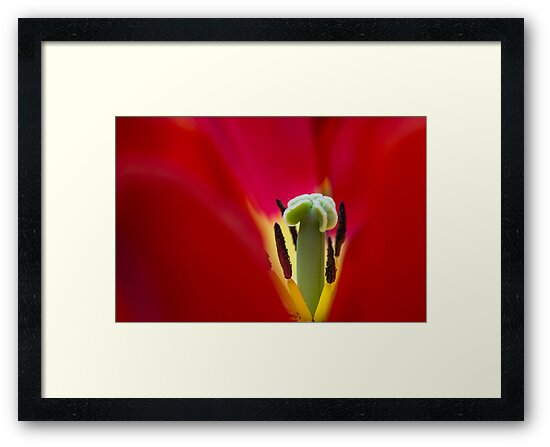 Framed by Karen Havenaar
