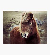 Beautiful Pony Photographic Print