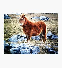 Beautiful Pony in Rocky Landscape Photographic Print