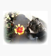 Max and the Flower Photographic Print