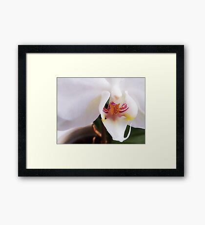 Orkide - flower Framed Print