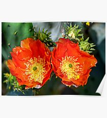 Morning Sun - Prickly Pear Cactus Poster