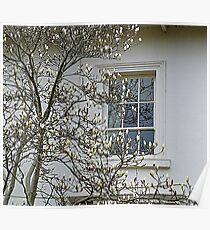 White Magnolia On White Walls Poster