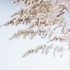 Dreamy Winter by Sarah Ciccone Photography
