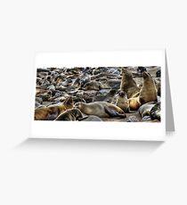 Cape Fur Seals Greeting Card