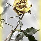 Withered Yellow Rose by ©The Creative  Minds