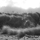 Solway grass by keithfitton