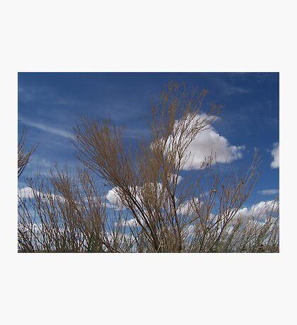 Brush and Sky Photographic Print