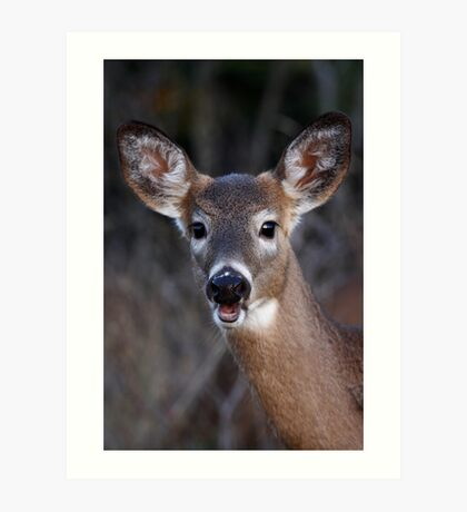 Well hello there! - White-tailed Deer Art Print