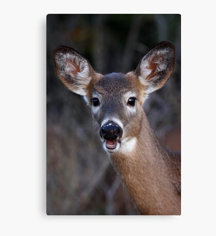 Well hello there! - White-tailed Deer Canvas Print