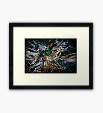 Diving Ducks Framed Print
