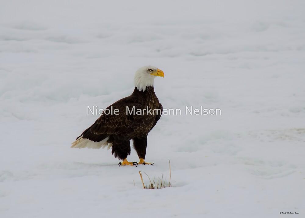 Very Proud Bald Eagle  by Nicole  Markmann Nelson