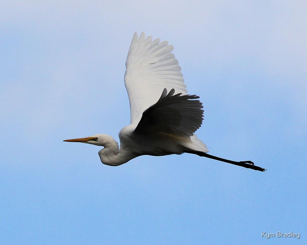 Egret In Flight Canberra Australia  no 2 by Kym Bradley