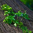 Vines on a Tree by Andrew Phipps