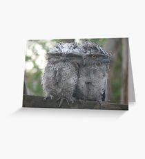Podargus strigoides - Tawny Frogmouths Greeting Card