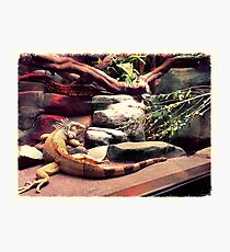 wildlife Photographic Print