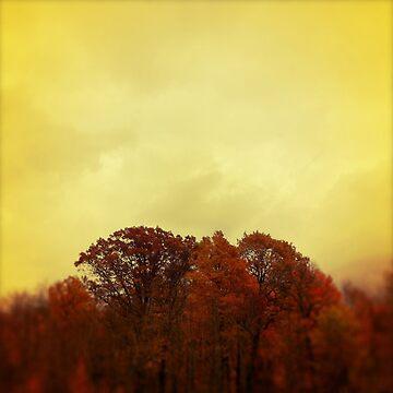 Fall Trees by tcounihan